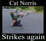 Cat Norris Strikes Again
