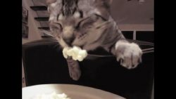 28 Seconds Of Funny Cats image