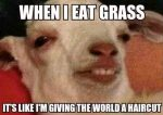 When I Eat Grass image