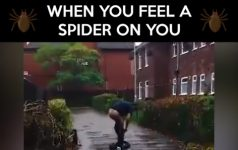 When You Feel A Spider On you