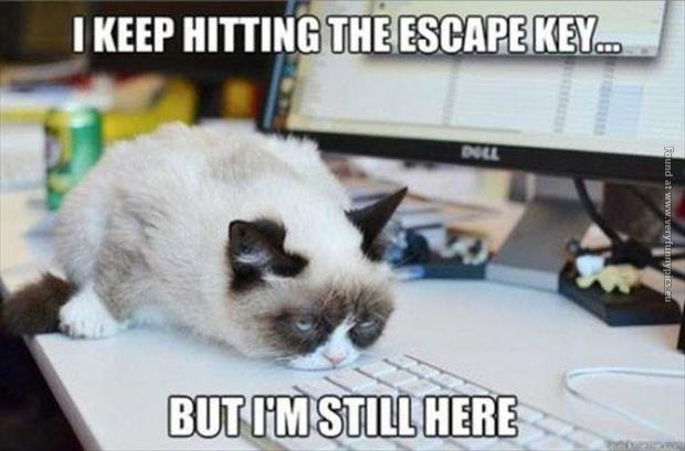 I Keep Hitting The Escape Key cat image