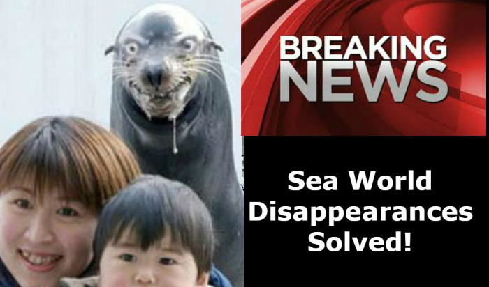 Sea World Disappearances Solved image