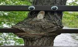 Funny Tree Googly Eyes image