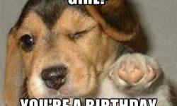 Birthday Girl Featuring Dog image