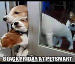Black Friday at Petsmart