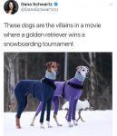 Villain Dogs