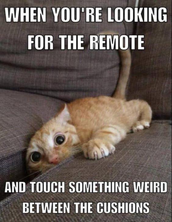 TV Remote Ick