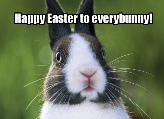 Happy Easter Everybunny image