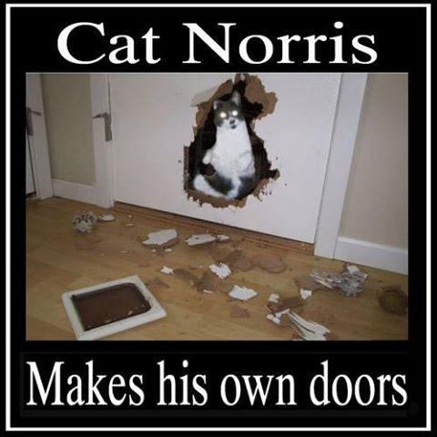 Cat Norris Makes His Doors image