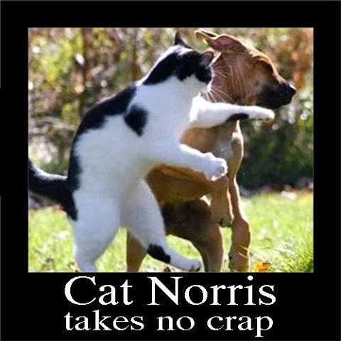 Cat Norris Takes No Crap