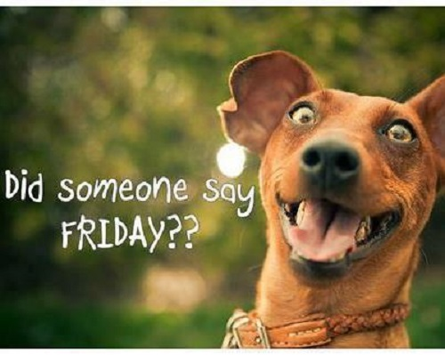 Funny Friday Dog Meme : Did someone say friday laughshop